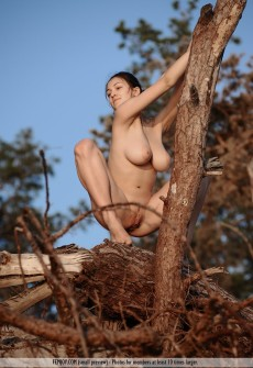 Hot Naked Girl Climbing A Tree